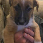 Shelby Lou, our new puppy