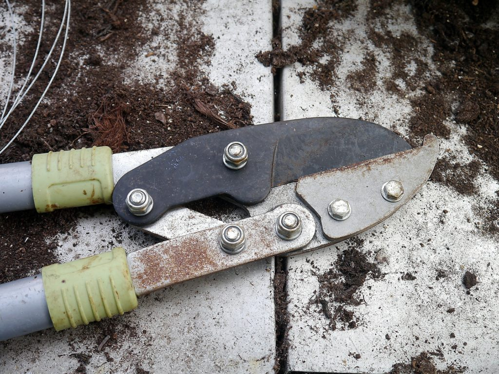"A pair of green hand pruners in Spoken Garden's ""7 Best Winter pruning tools"""