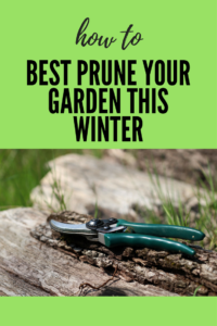 Hand pruners and how to Best Prune Your Garden This Winter-Spoken Garden