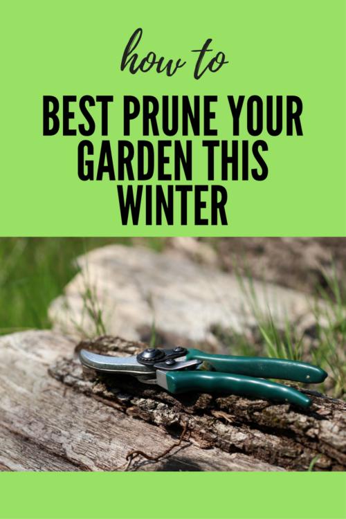 How to Best Prune Your Garden This Winter