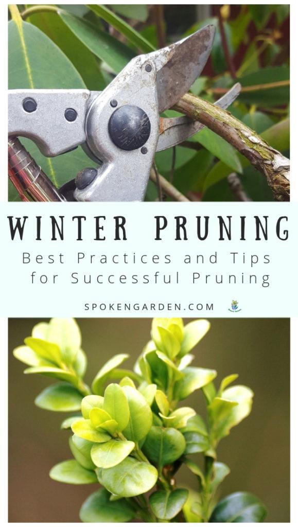 Winter pruning best practices