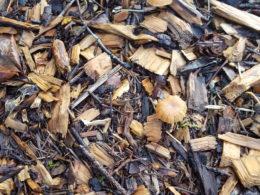How to Mulch- Spoken Garden