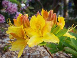 Top 7 Reason Mulching is Beneficial- Spoken Garden