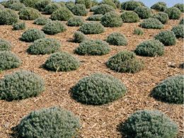 Top 7 Reasons Mulching Your Garden is Beneficial