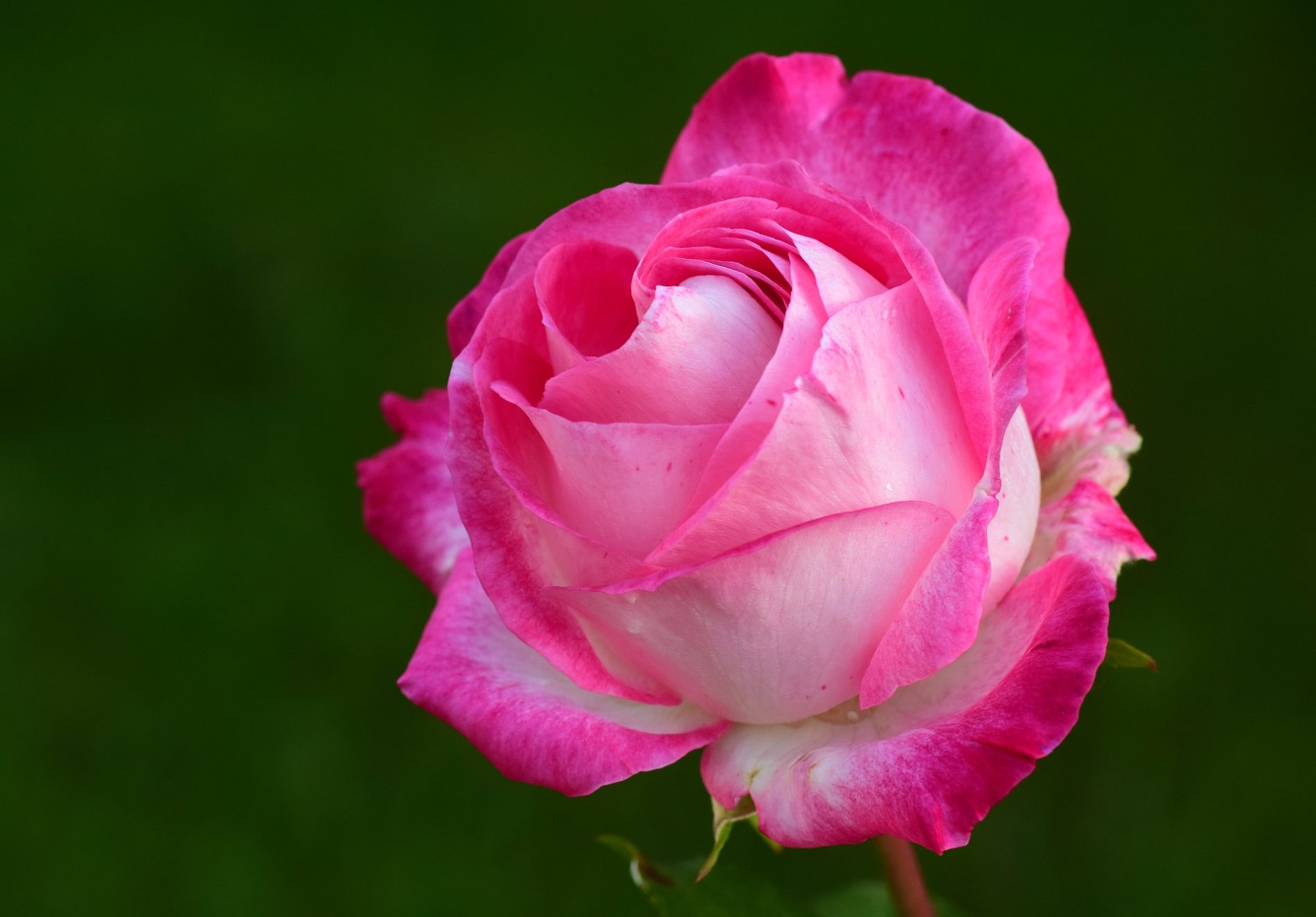 A Rose by Any Other Name- Spoken Garden