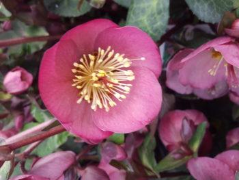 Ep12 Winter Blooming Garden Plants