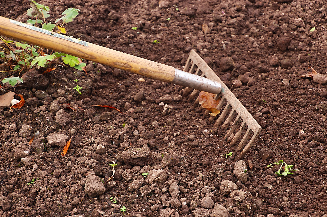You have a garden, it will need garden maintenance. Whether it be pruning, mulching, lawn care, watering, or caring for plants, we've got you covered!