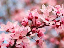 Top 5 Spring Garden Tasks You Should Start Right Now!