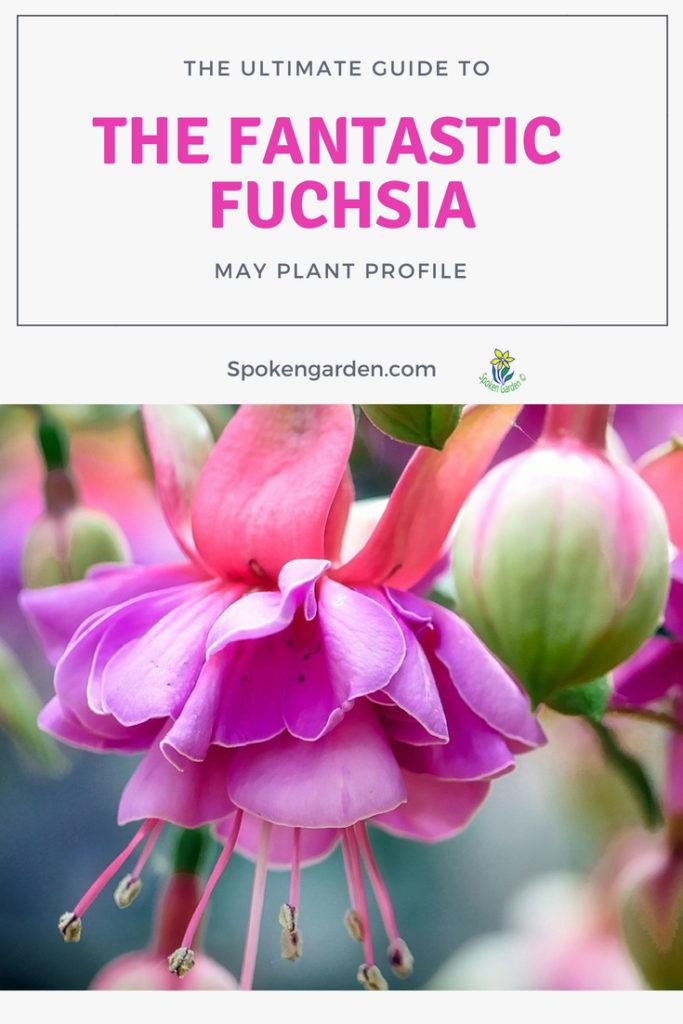 Ultimate Guide to the Fantastic Fuchsia