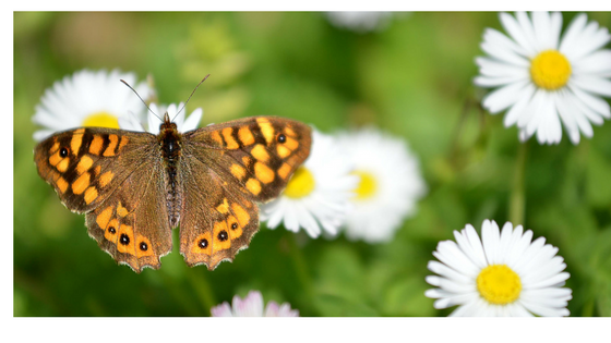 Butterflies are in our top 5 best pollinators list. Read our post to learn about other best pollinators, how to attract them to your garden, and why!