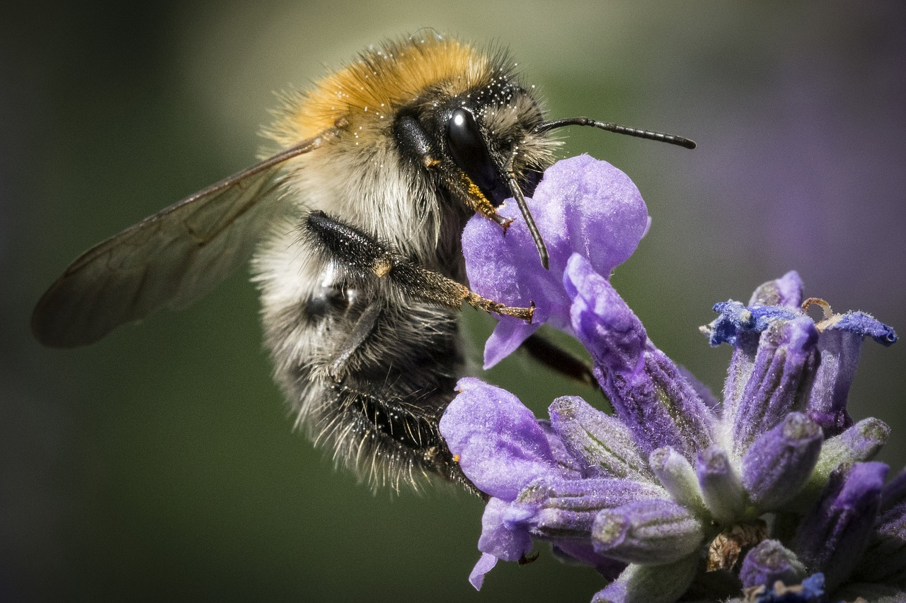 Attract pollinators, like this bee, to your yard by implementing Spoken Garden's 5 simple steps!