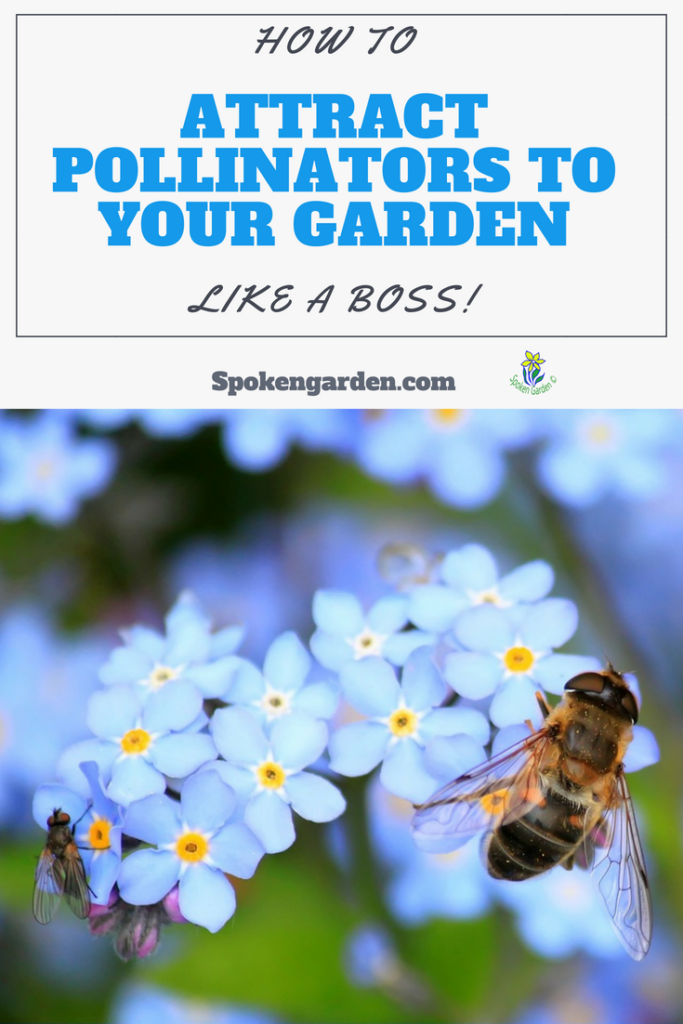 How to attract pollinators to your garden like a boss! Learn how with our 5 simple steps- Spoken Garden