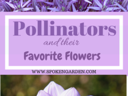 Ep. 14: Garden Pollinators and Their Favorite Flowers