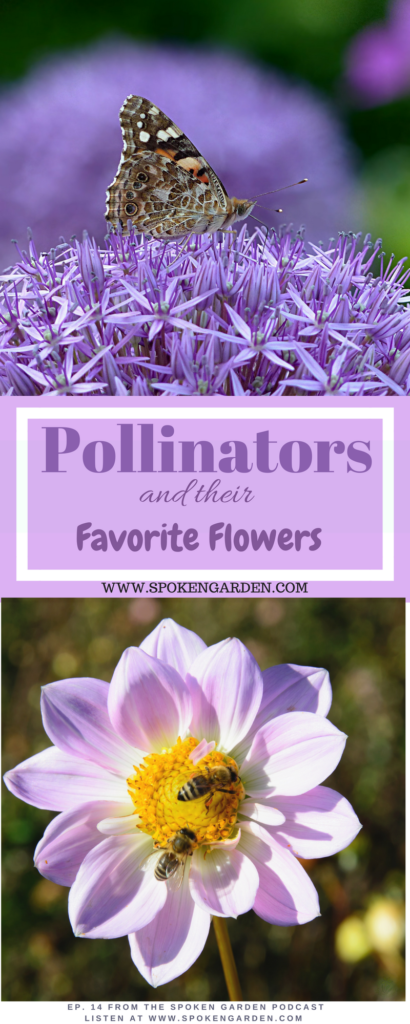Two bees land on a purple flower. Read more about Garden Pollinators and Their Favorite Flowers