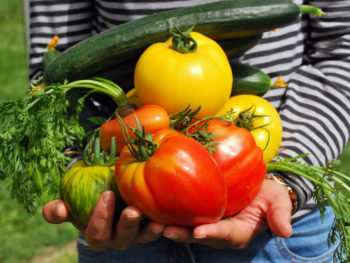 9 fruits and vegetables to plant now for a summer harvest- Spoken Garden
