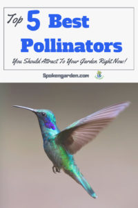 "What can you do in your own yard to attract more pollinators? Did you know some pollinators need access to food sources year-round? Read our ""Top 5 Best Pollinators You Should attract to your garden right now"" to learn which pollinators will give you the biggest bang for your buck, so to speak."