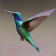 Hummingbirds are one of the Best Pollinators you should attract to your garden right now, by Spoken Garden