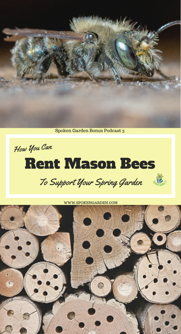 A mason bee resting on a table and an insect hotel perfect for renting mason bees
