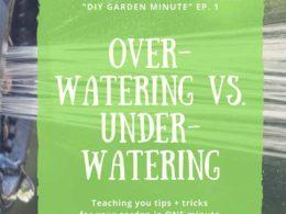 DIY Garden Minute Ep. 1: Over vs. Under Watering