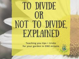 DIY Garden Minute Ep 4: To Divide or Not To Divide, Explained!