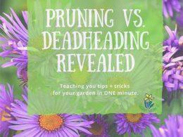 DIY Garden Minute Ep. 2: Pruning vs Dead-Heading Revealed!