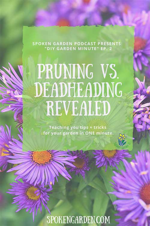 DIY garden minute- pruning vs. deadheading