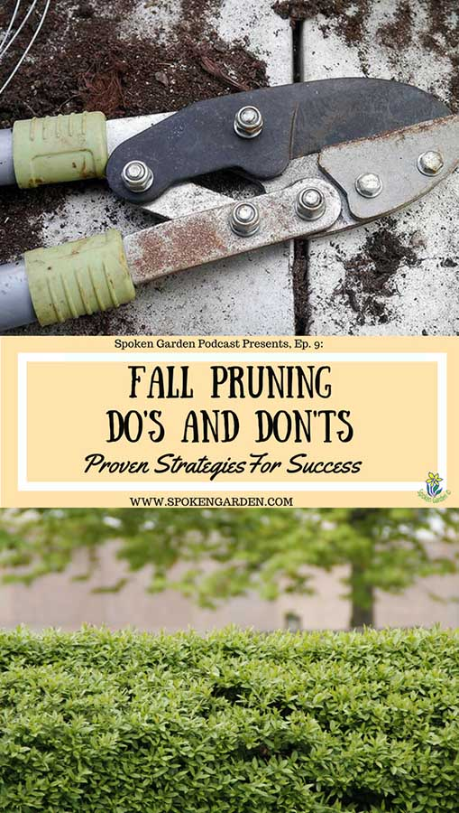 Fall Pruning Do's and Don'ts Pinterest pin with a picture of hand pruners and a laurel hedge