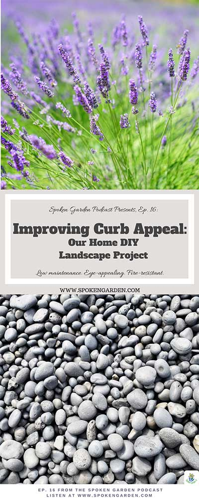 Lavender and rock mulch creating beautiful front yard curb appeal