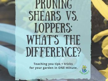 DIY Garden Minute Ep. 5: Pruning Shears vs Loppers- What is the Difference?