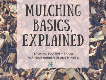 DIY Garden Minute Ep. 7: Mulch Basics Explained!