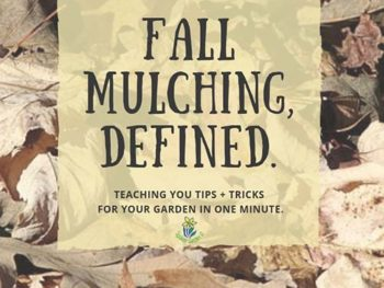 DIY Garden Minute Ep. 8: Fall Mulching, Defined.