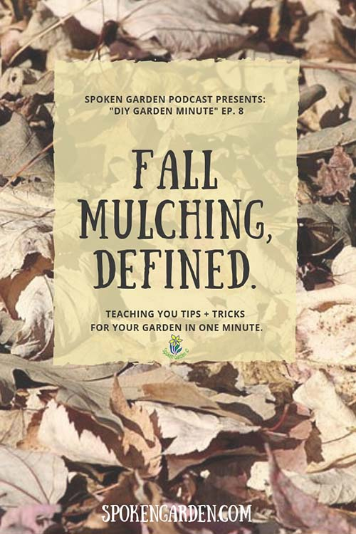 Fall leaves forming a layer of mulch as advertised on Spoken Garden's Fall Mulching, Defined podcast.