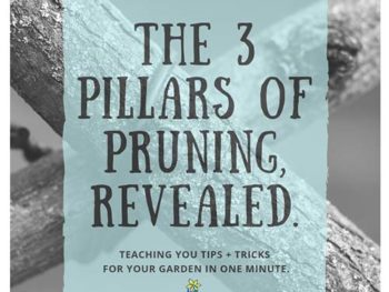 3 Pillars of Pruning, Revealed! DIY Garden Minute Ep. 10