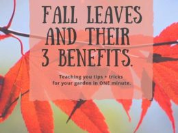 DIY Garden Minute Ep. 12: Fall Leaves and Their 3 Benefits