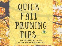 DIY Garden Minute Ep. 13: Quick Fall Pruning Tips