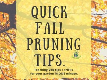 DIY Garden Minute Ep. 13: Quick Fall Pruning Tips