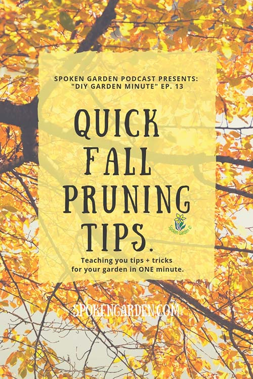 "A maple tree in the fall season with large yellow and orange leaves in Spoken Garden's ""Quick Fall Pruning Tips"" advertisement"