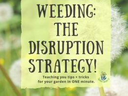 DIY Garden Minute Ep. 14: Weeding- The Disruption Strategy!