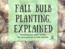 DIY Garden Minute Ep. 15: Fall Bulb Planting, Explained!