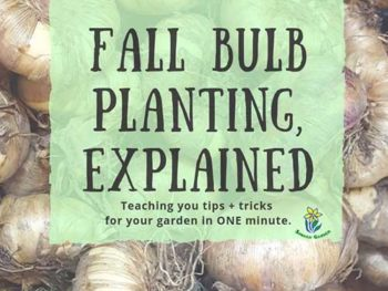 DIY Garden Minute Ep. 15: Fall Bulb Planting, Explained!