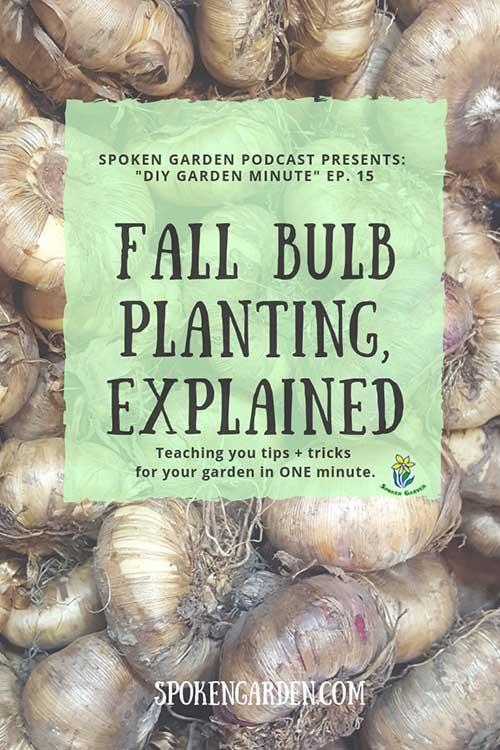 "A bunch of flower bulbs wating to be planted in Spoken Garden's ""Fall Bulb Planting"" podcast advertisement."