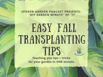 DIY Garden Minute Ep. 17: Easy Fall Transplanting Tips