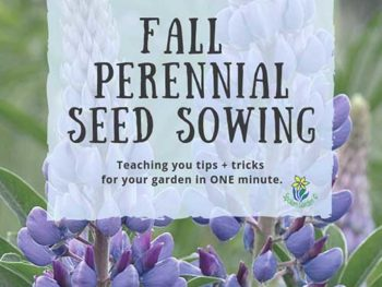 DIY Garden Minute Ep. 19: Fall Perennial Seed Sowing