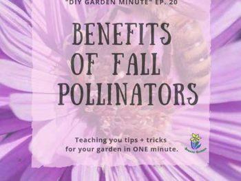 DIY Garden Minute Ep. 20: Benefits of Fall Pollinators