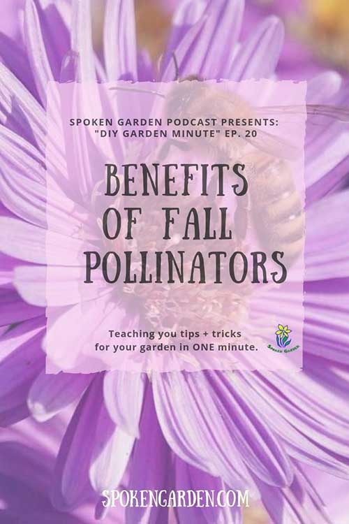 "A large, purple flower with a honey bee in the center is featured on Spoken Garden's ""Benefits of Fall Pollinators"" podcast advertisement."