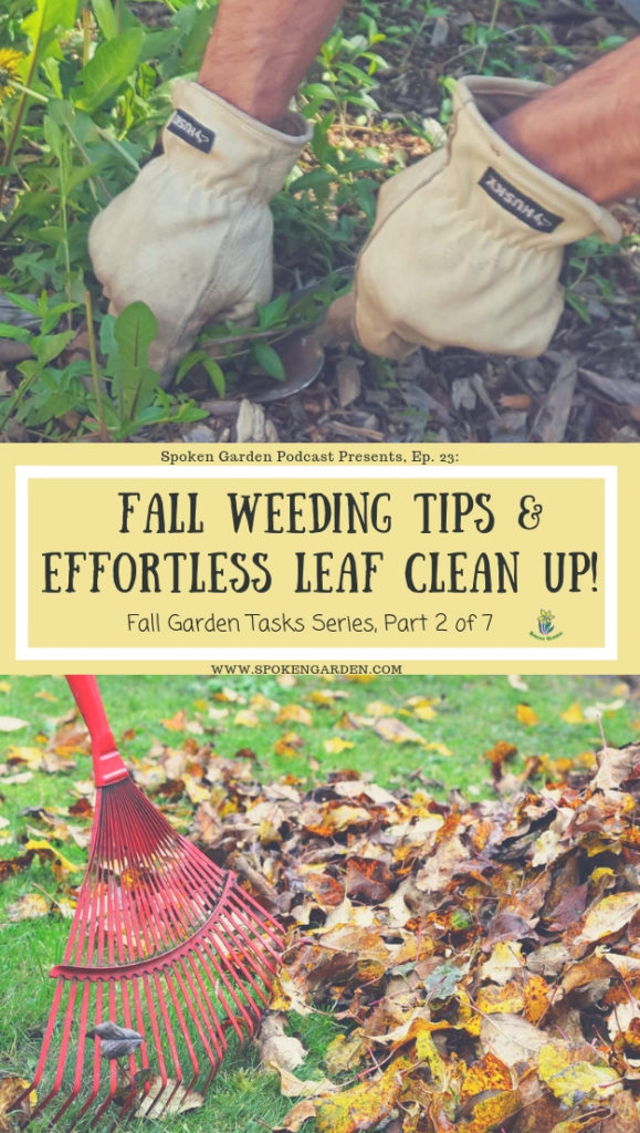 hands digging and removing unwanted plants or weeds, along with a rake being used to pile up fallen leaves on green grass.