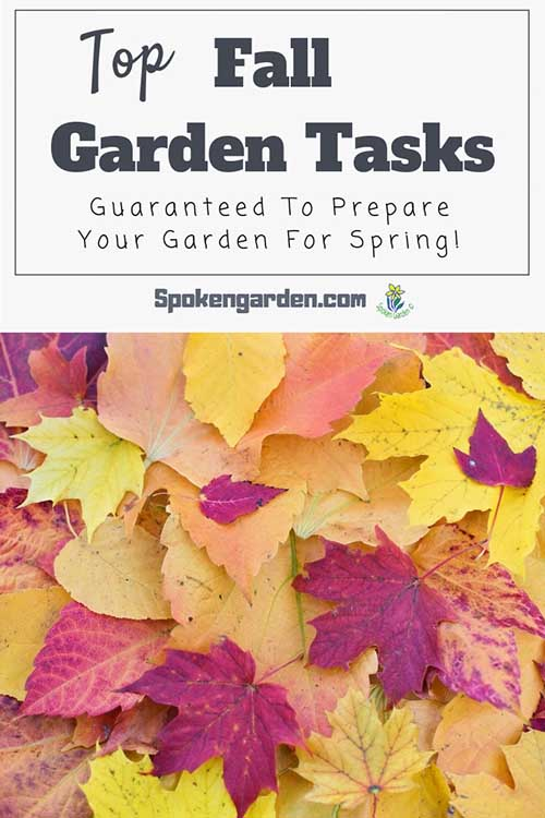 "A pile of brightly colored red, orange, and yellow fall leaves in Spoken Garden's ""Top Fall Garden Tasks"" blog post advertisment."