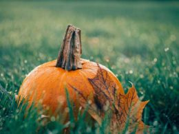 Top Fall Garden Tasks Guaranteed To Prepare Your Garden For Spring!