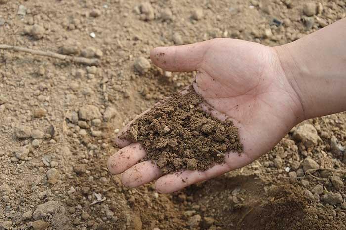"""A hand picking up a mix of soil and fertilizer in Spoken Garden's """"Top Fall Garden Tasks"""" post"""