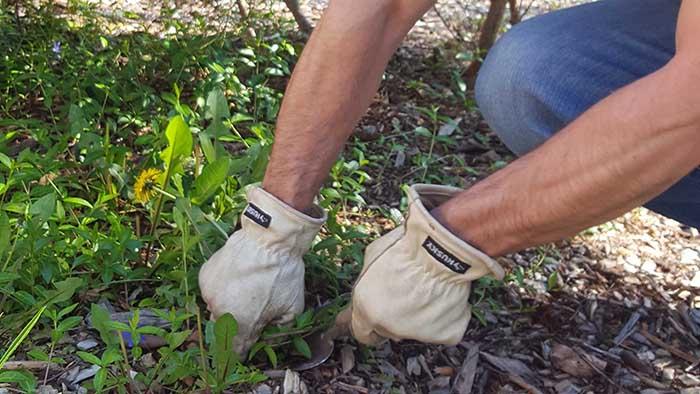 """A man hand pulls weeds out of a garden bed in Spoken Garden's """"Top Fall Garden Tasks"""" post."""